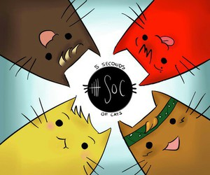 5sos, cat, and 5 seconds of summer image