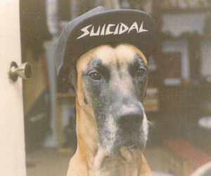 dog, suicidal, and swag image