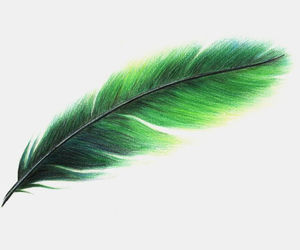 art, black, and feather image