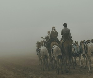 camels, fog, and middle east image