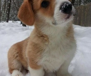 pretty, puppy, and snow image