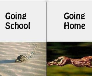 school, funny, and home image
