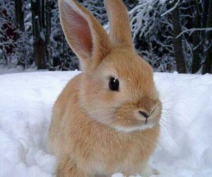 bunny, rabbit, and snow image