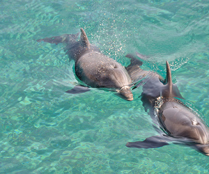 dolphin, cute, and water image