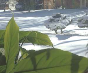 plant, snow, and chicago image