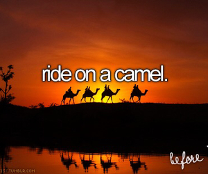 camel, ride, and bucket list image
