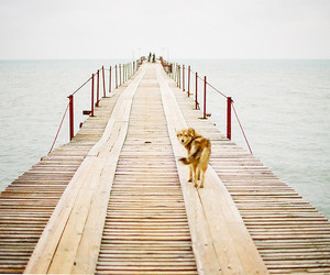 dog, sea, and ocean image