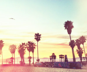 beach and palm trees image