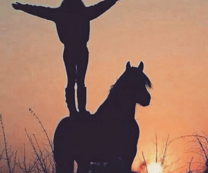 horse, sunset, and equestrian image