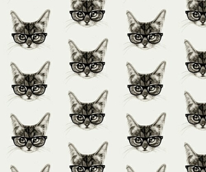 cat, cats, and glasses image