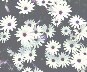 flower, purple, and green image