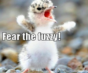 cute funny animals image