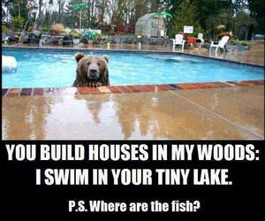 bear, funny, and pool image