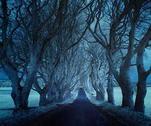 road, tree, and snow image