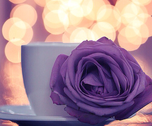 photography, background, and cup image