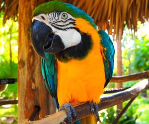 bahamas, parrot, and попугай image