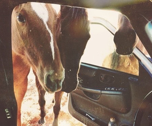 horse and car image