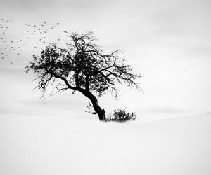 birds, black&white, and nature image