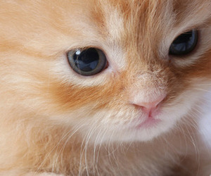 animals, kittie, and cute image