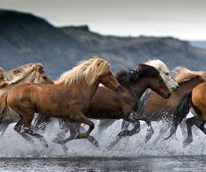 horse, animal, and wild image