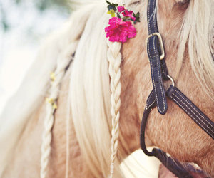 horse and vintage cute image