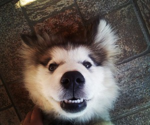 dog, friendly, and funny image
