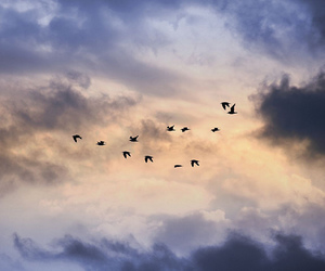 heaven and birds image