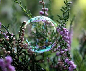 bubbles, flowers, and nature image