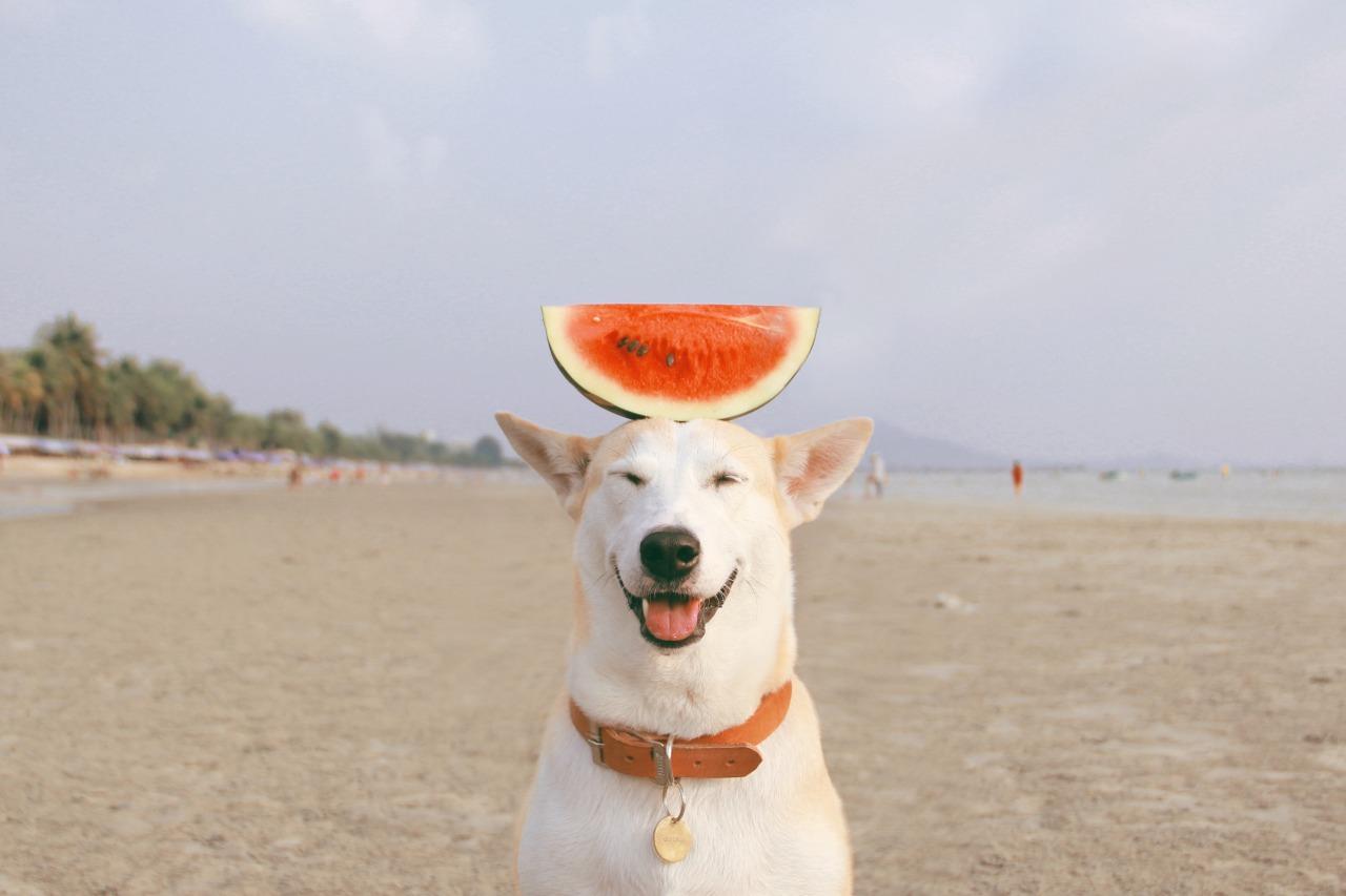 dog, watermelon, and beach image