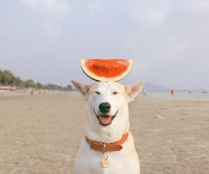 dog, watermelon, and beach image