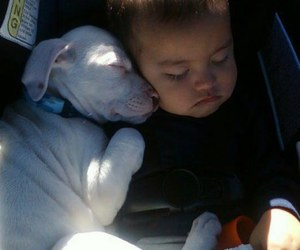 adorable, pup, and baby image