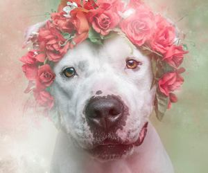 crown of flowers, dog, and love image