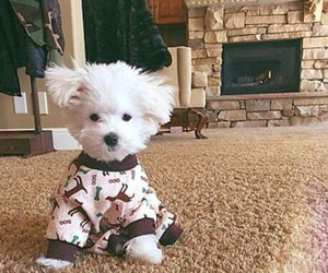 dog, pullover, and cute image