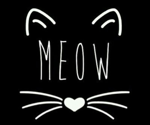 black and withe, cat, and meow image