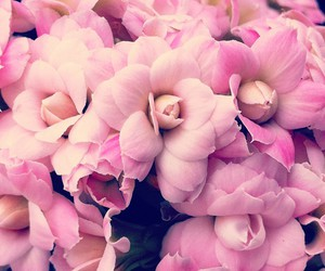 feeling, flower, and pink image