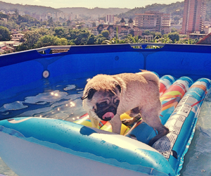 dog, pug, and summer image