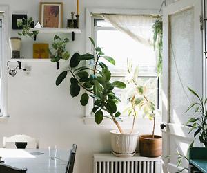 home, plants, and room image