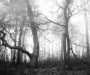 forest and black and white image