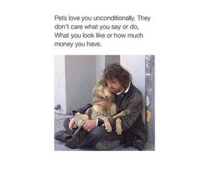 dog, love, and pet image