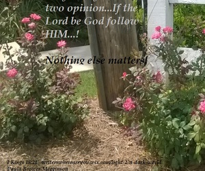 garden, nothing else matters, and roes image
