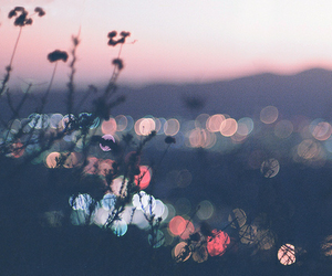 light, indie, and nature image