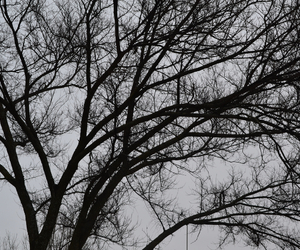 cold, trees, and winter image