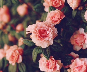floral, roses, and flowers image