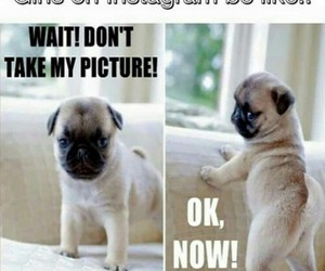 funny, instagram, and dog image