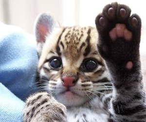 baby animal, exotic, and cute image