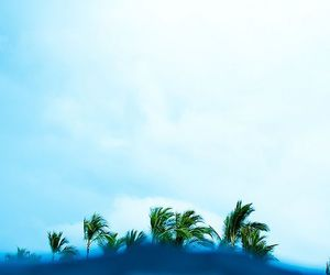 sea, blue, and palms image