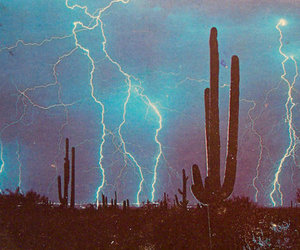 cactus, pale, and storm image