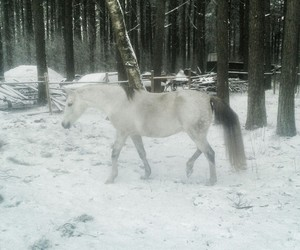 horse, latvia, and snow image
