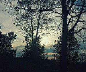 photography, sunset, and trees image