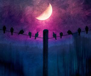 bird, moon, and night image